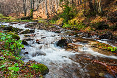 Mountain river the forest Royalty Free Stock Photo