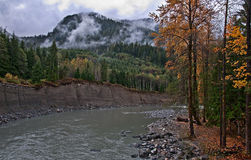 Mountain River in Fall - Pilchuck, WA. This landscape is a mountain river, Pilchuck river with steep banks, forested evergreen trees, and trees in autumn colors royalty free stock photo