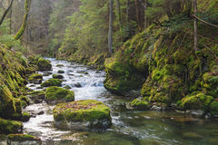 Mountain river. Fast mountain river flowing among mossy stones royalty free stock photography