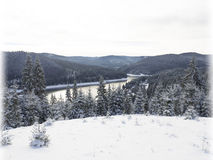 Mountain river  Fir trees. Royalty Free Stock Image