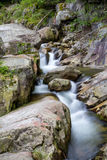 Mountain river flow. Little mountain river in Retezat National Park, Romania Stock Photography