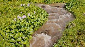 Mountain river with flowers and dense greenery. The mountain volcanic river originating from the Mayon volcano. Legazpi. Philippines. Shooting in motion stock video