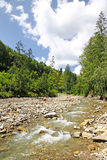 Mountain river flowing through the fir forest Stock Images
