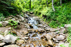 Mountain river flowing in forest Stock Image