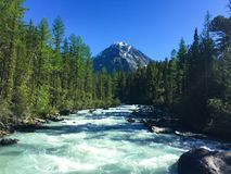 Mountain river flowing in the forest. Blue Kucherla river in Belukha national park, Altai mountains, Siberia, Russia stock photo