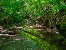 Mountain river flowing through the forest Stock Photography