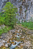 Mountain river flowing by the gorge Royalty Free Stock Photos