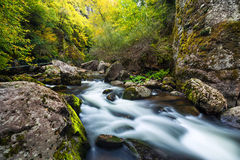 Mountain river flowing through the green forest Stock Photos