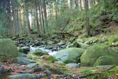 Mountain river flowing through the green forest Royalty Free Stock Image