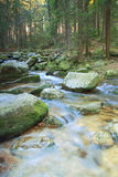 Mountain river flowing through the green forest Stock Images