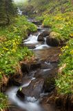 Mountain river flowing through the green forest. Stream in the wood. Royalty Free Stock Images