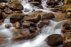 Mountain river flowing through the green forest. Stream in the wood. Royalty Free Stock Image