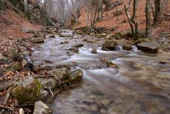 Mountain river flowing through the green forest. Stream in the wood. Royalty Free Stock Photography