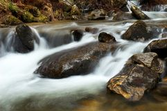 Mountain river flowing through the green forest. Stream in the wood. Stock Photos