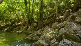 Mountain River Flowing In Green Forest stock footage