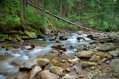 Mountain river flowing through the green forest. Stream in the wood. Royalty Free Stock Photo