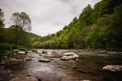 Mountain river flowing through the green forest Royalty Free Stock Photo