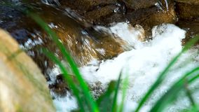 Mountain river flowing in green forest. Water stream flow among stones in mountain river. Close up rapid water flow in. Fast brooks stock footage