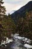 Mountain river flowing among the mixed forest on the background of the forest slopes Stock Images