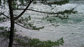 Mountain river flows against the trees. Stony shore stock video footage
