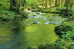 Mountain river flows through the boxwood forest, Abkhazia Royalty Free Stock Photography