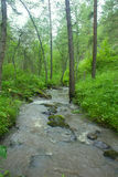 Mountain river flows in forest under a bias Royalty Free Stock Photos