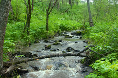 Mountain river flows in forest under a bias Royalty Free Stock Photo