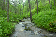 Mountain river flows in forest under a bias Stock Photography