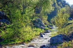 The mountain river. Royalty Free Stock Photo