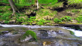 Mountain river flows over rocks in green forest. stock video