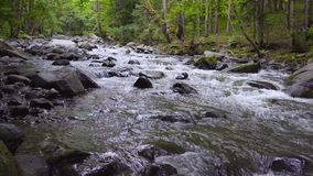 The mountain river flows rapidly in the afternoon among the trees 4k stock video footage