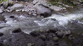 The mountain river flows rapidly in the afternoon among the trees slow stock footage