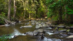 Mountain River flows through tropical rain forest jungle in Doi Inthanon, Thailand. Mountain River flows through tropical rain forest jungle in Doi Inthanon stock footage