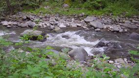 The mountain river flows rapidly in the afternoon stock video footage