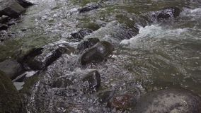 The mountain river flows rapidly in the afternoon among the trees close up stock video