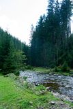 Mountain river flows in a wooded area. The mountain river flows in a wooded area royalty free stock photos