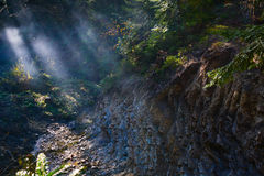 Mountain river, fog and rocks of Carpathian Mountains in Ukraine Royalty Free Stock Image