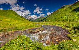 Mountain river at the foot of Mt. Shkhara Royalty Free Stock Photos