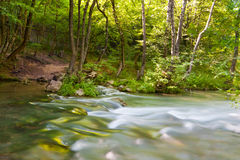 Mountain river in forest Royalty Free Stock Image