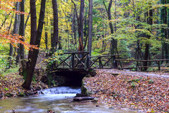 Mountain river in forest, autumn landscape Stock Photo