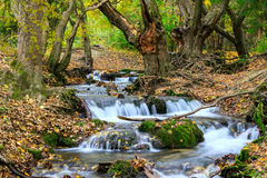 Mountain river in forest, autumn landscape royalty free stock images
