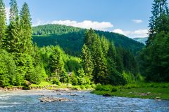 mountain river in forest. beautiful summer landscape royalty free stock image
