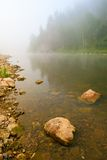 Mountain river and forest in fog at dawn Stock Image