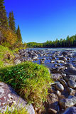 Mountain river in the forest with green trees Royalty Free Stock Photos