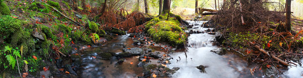 Mountain river into the forest with moss and dried leaves Stock Image
