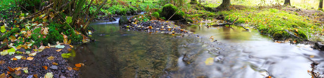Mountain river into the forest with moss and dried leaves Royalty Free Stock Images