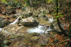 Mountain river in forest. Stock Image