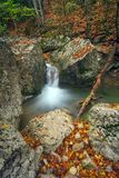 Mountain river in forest. Royalty Free Stock Photography