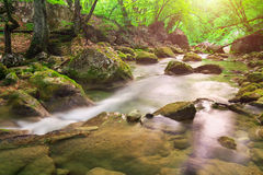 Mountain river in forest and mountain terrain. Stock Image
