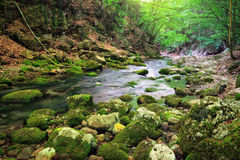 Mountain river in forest and mountain terrain. Royalty Free Stock Photography